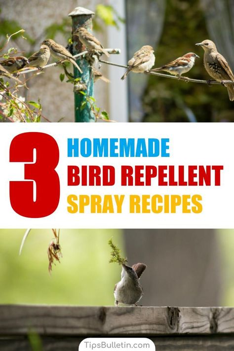 Learn how to make simple homemade bird repellent sprays with non-toxic, environmentally friendly products. These simple pest control methods will keep birds ...