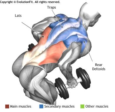 LATS -  BENT OVER TWO DUMBBELL ROW