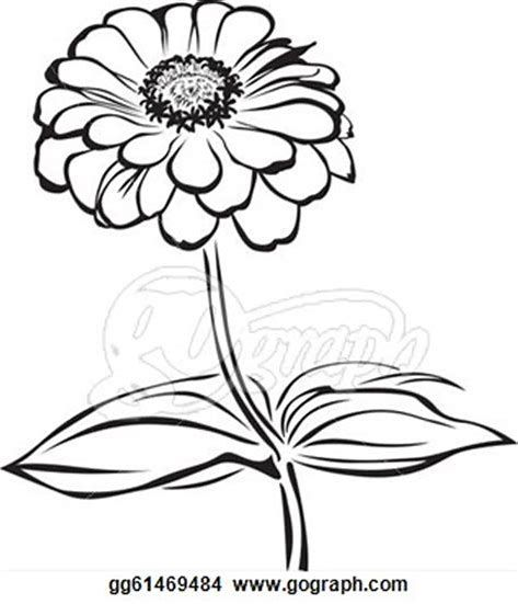 Image Result For Zinnia Flower Drawing Flower Drawing Zinnia Flowers Zinnias