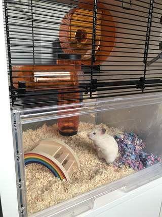 Hamster Cages Plastic Hamster Cages Plastic Hamsterkafige Aus