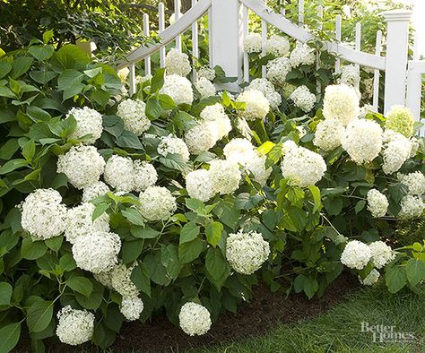 These tips will help you step up your yard's landscaping. If you already have hydrangeas growing in your garden, the next step to producing more flowers is to give them the proper care.