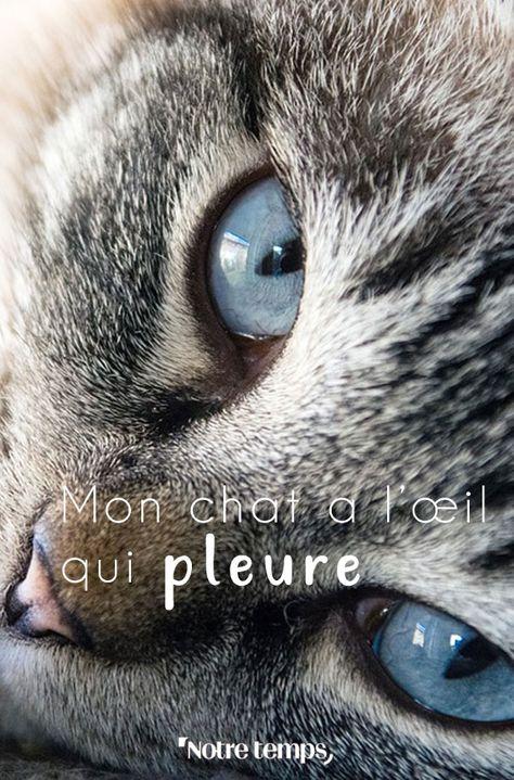 Clair coulent chat qui yeux Comment nettoyer