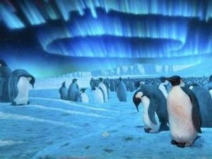 juzny pol | Nature, Animals, Penguins