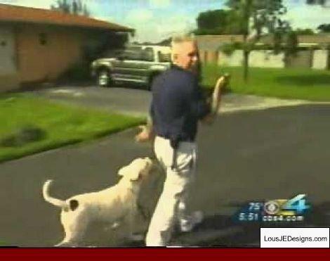 Dog Training To Stop Biting And Pics Of Dog Whisperer Training