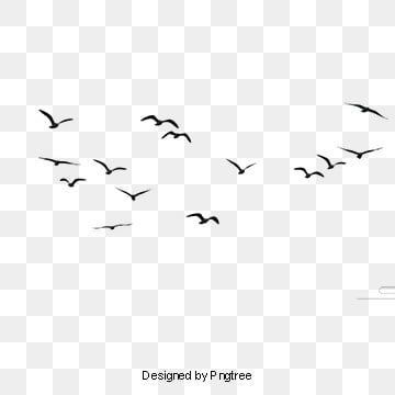 Bird Png Vector Psd And Clipart With Transparent Background For Free Download Pngtree Background Flying Bird Silhouette Bird Silhouette Birds Flying