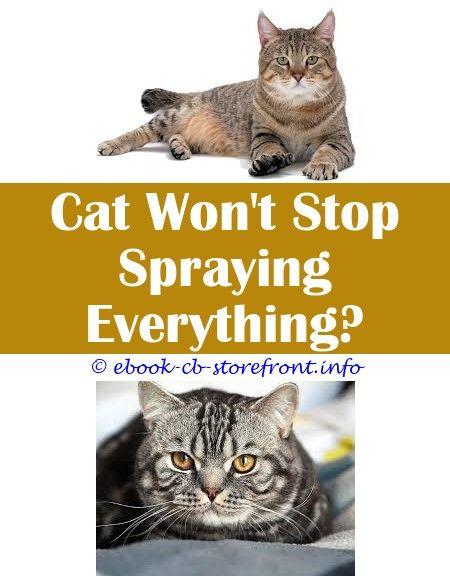 Pin En Stop Cat Spray Ideas