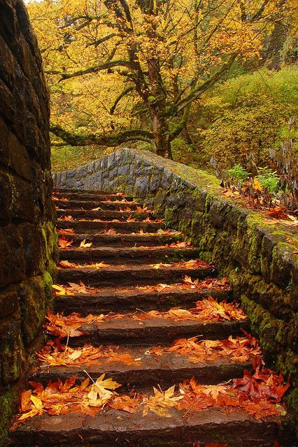 Beautiful autumn stairway in nature {Horsetail stairs Columbia River Gorge Oneonta, Oregon} Columbia River Gorge, Stairway To Heaven, Stairways, Belle Photo, Autumn Leaves, Fallen Leaves, Autumn Fall, Autumn Garden, Winter