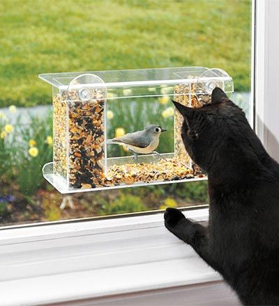 This is a great bird feeder because it sticks to the window (so the children and cats can see the birds up close), and it has a one-way mirror so the birds don't see the cat and the kids!  Holds plenty of food.