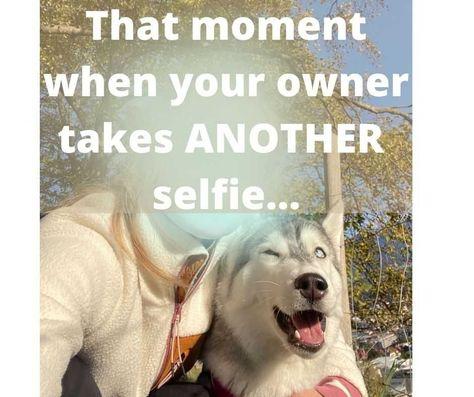 smiling dog - husky smiling for selfie with owner awkwardly #smilingdogs #happydogs #funnydogs #smilingdogphotos #smilinganimals