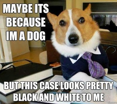 Campaign Chronicles Lawyer Dog Another Weird Npc For My Campaign Funny Dog Memes Funny Animal Memes Dog Memes