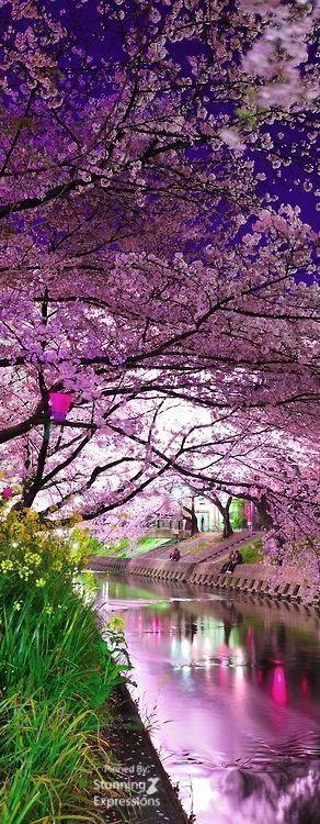 Japan Travel Cherry Blossom Festival Romantic Honeymoon Destinations Travel Destinations Asia Japan