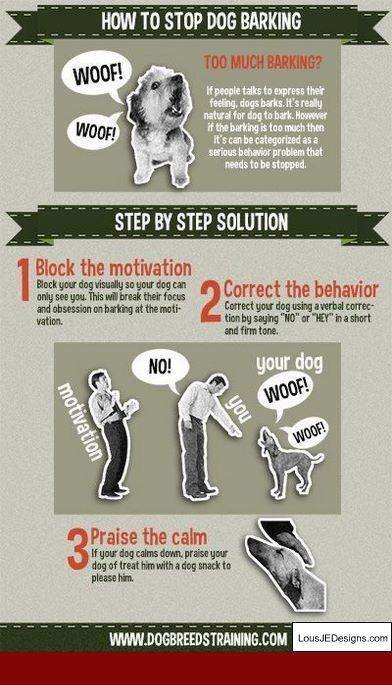 How To Train A Dog To Stay In The Yard And Pics Of Tips For Guard