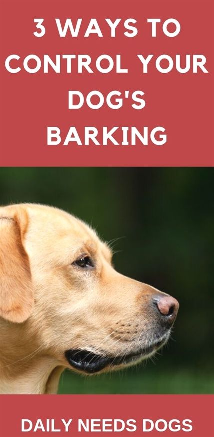 Dog Training By K9 1 Dog Training Shock Collar With Remote Dog