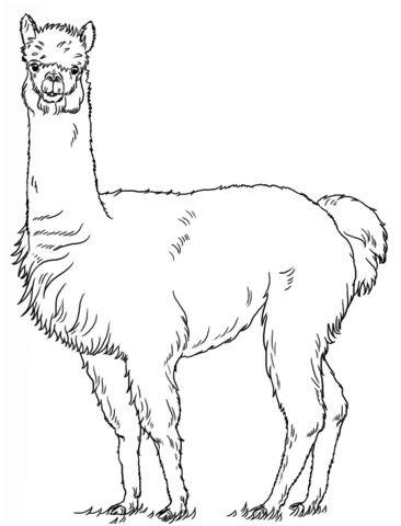 14 Modeste Coloriage Lama Pics Coloriage Tutoriel Dessin Dessin De Lama