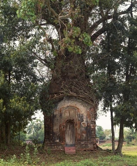 Resembles the tree from Princess Bride! :) Laura McPhee, Banyan Tree and Century Terracotta Temple, Attpur, West Bengal, India Hidden Places, Fairy Houses, Hobbit Houses, Hobbit Land, Houses Houses, Crazy Houses, Garden Houses, Dream Houses, Doll Houses