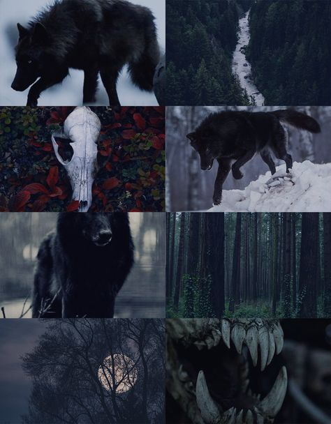 Black Wolf Aesthetic, for Anon Wolf Wallpaper, Dark Aesthetic, Magic Aesthetic, Fantasy Art, Werewolf Aesthetic, Art, Aesthetic Wallpapers, Dark Art, Wolf Art