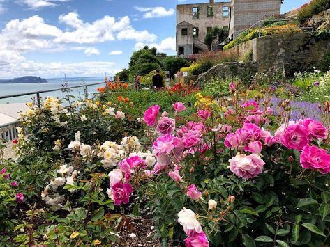 Alcatraz Island San Francisco Ca Beautiful Flowers Garden