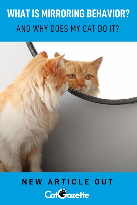 130 For Pet Parents Ideas Pet Parent Cats Cat Parenting