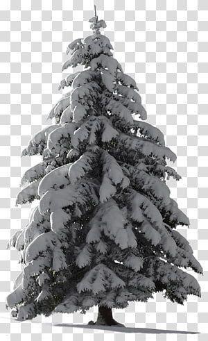 Christmas Tree Snow Fir Tree Transparent Background Png Clipart Background Chr Background Chr Christmas C Fir Tree Christmas Tree Clipart Chrismas Tree