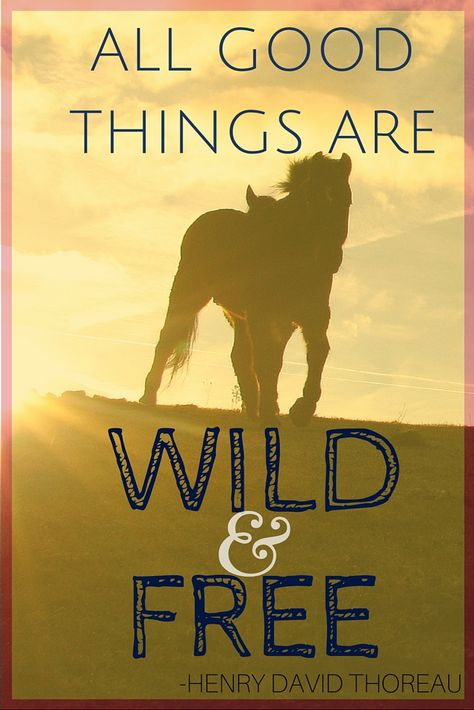 """All good things are wild and free."" -Henry David Thoreau #travel #quote…"