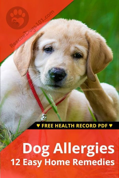 The Ultimate Guide To Home Remedies For Dog Allergies Home