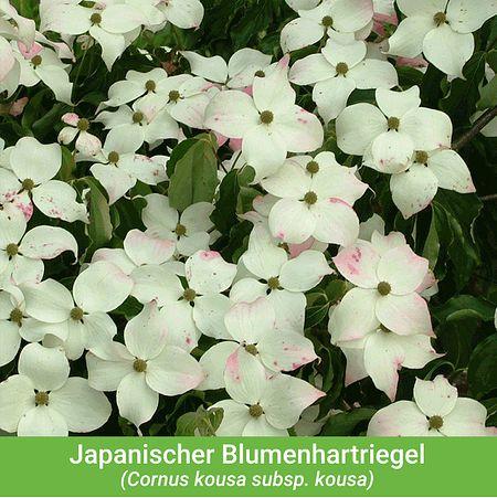 Mein Schoner Garten Vogelschutz Hecke Bird Lover 16 Pflanzen Gunstig Online Kaufen Mein Schoner Garten Shop In 2020 Pflanzen Hecke Garten