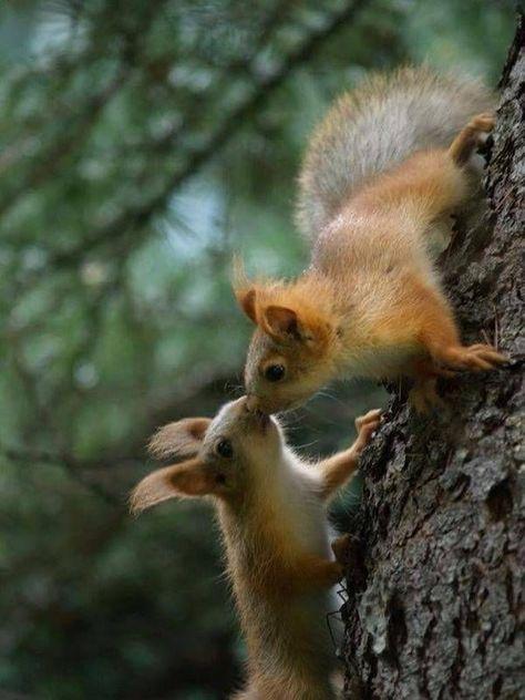 sich küssende eichhörnchen auf einem baum  tieregarden