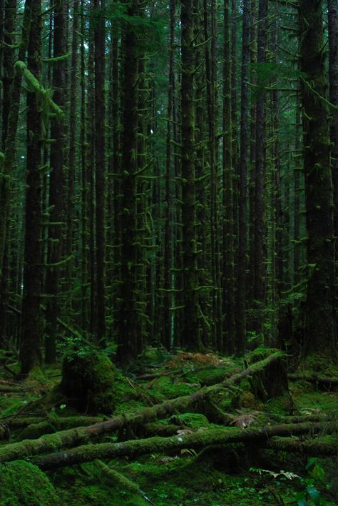 Olympic National Forest - - Outside the National Park, this incredibly dark, wet, silent forest will likely be logged to stumps before too much longer like so much of the Olympic Peninsula outside the scope of the park. Forest Park, Tree Forest, Dark Forest, Dark Green Aesthetic, Nature Aesthetic, Forest Poster, The River, Olympic National Forest, Power Trip