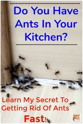 How To Get Rid Of Ants In Kitchen Cupboards Naturally