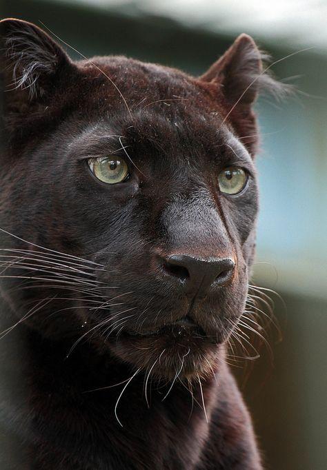 7 der rosarote panther ausmalbilder zum ausdruckenideen