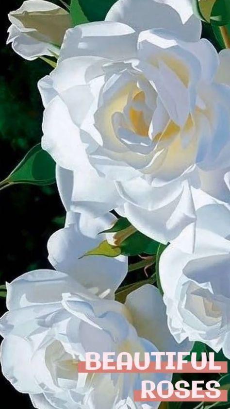 Beautiful Roses by Floriferous Garden www.floriferous-garden.com #roses #rose #flower #flowers #floriferousgarden #garden #gardens #gardening #love
