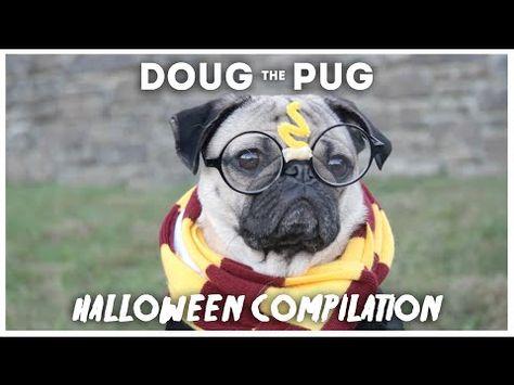 Doug The Pug Halloween Compilation Youtube Doug The Pug Pugs