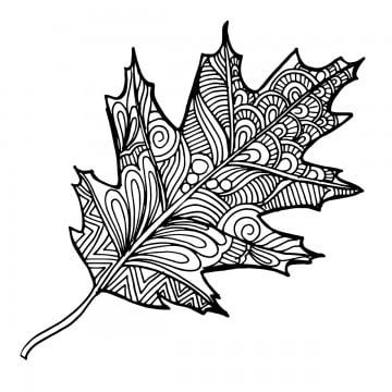 Hand Drawn Black And White Autumn Leaf Hand Drawn Black Png And Vector With Transparent Background For Free Download Leaf Illustration Leaf Art Autumn Art