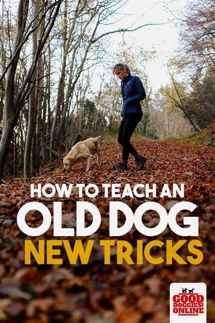 Gps Dog Training Collar Dog Training 12020 K9 1 Dog Training