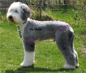 Old English Sheepdog Grooming Haircut Sport Clip Poodlepuppyclip Old English Sheepdog English Sheepdog Old English