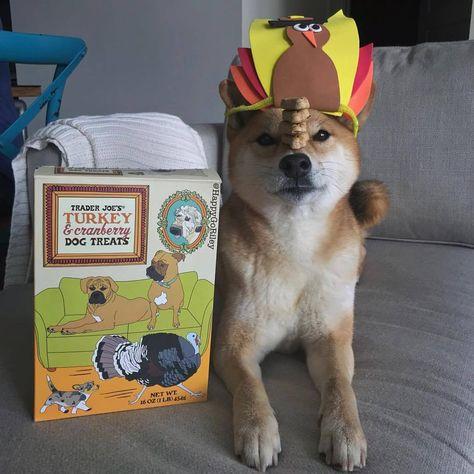 barkpost It's turkey week!!🐾🍽🍗...
