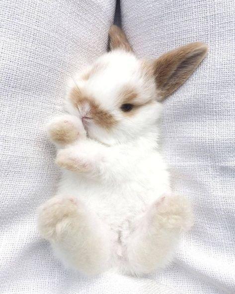 Rabbits    lapins #lapins #rabbits