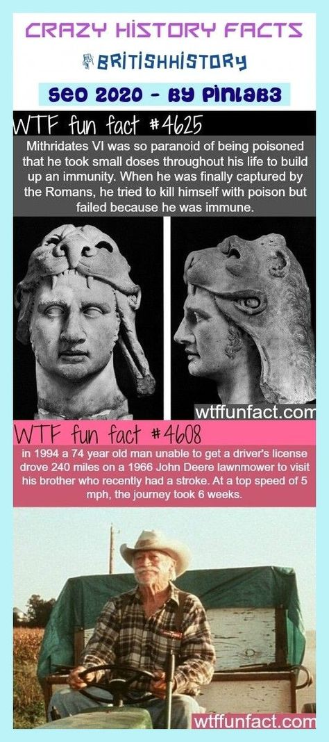 crazy history facts . cool history facts, history facts funny, american history facts, random history facts, black history facts, indian history facts, world history facts, unknown history facts, egyptian history facts, secret history facts, english history facts, european history facts, viking history facts, irish history facts, royal history facts, history facts australia, old history fa | random history facts funny #crazy #history #facts #britishhistory #history