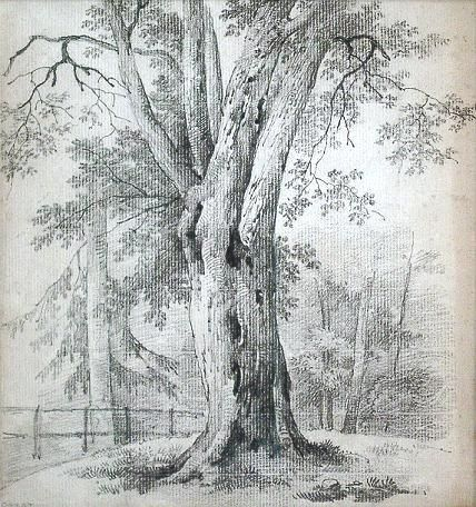 Drawings Of Trees In Winter