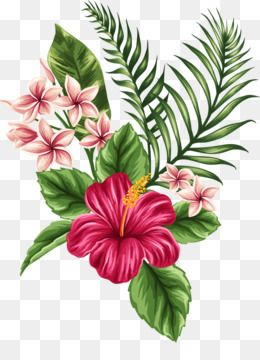 Flower Tropics Drawing Clip Art Tropical With Images Flower
