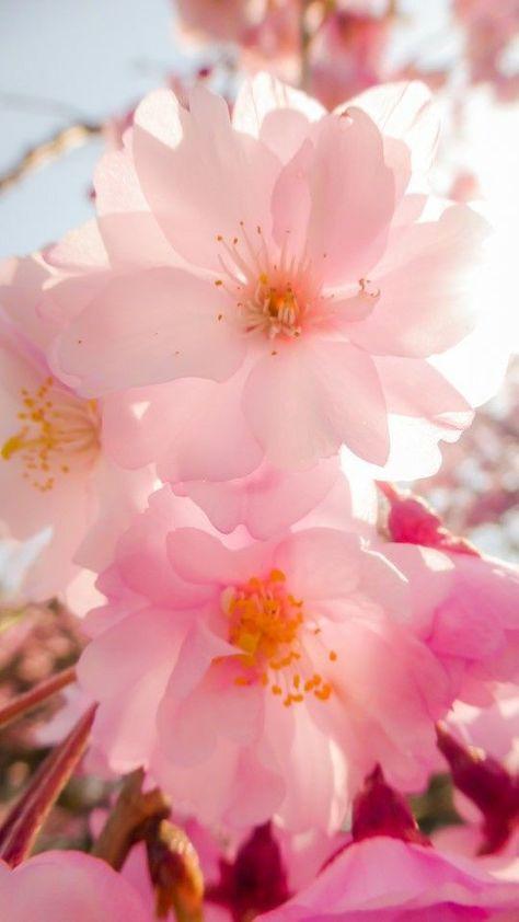 Wunderschön - #sakura #Wunderschön