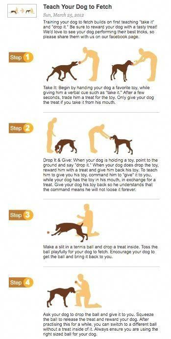 Pin By Train Your Own Dogs On Stop Dog From Jumping Dog Training