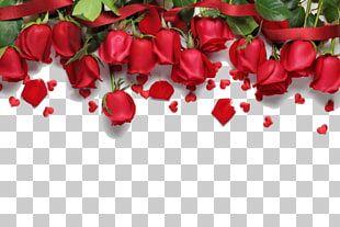 Pin En Rosas Hermosas Con Frases