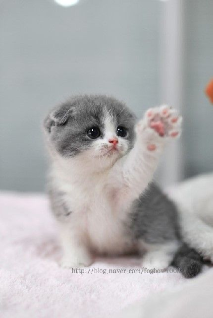 little kitten: