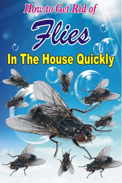562e5f3339097b61e01e110115cbe1bf - How To Get Rid Of House Flies In India