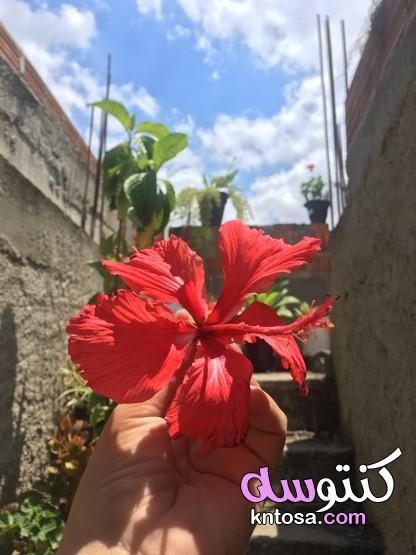 ورد كيوت يد ماسكه ورده حمراء فتاة تحمل باقة ورد بنات محجبات حاملين ورد يد تحمل ورد Plants