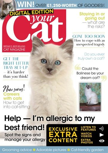 Your Cat Magazine Animal Magazines Male Magazine Cat Magazine