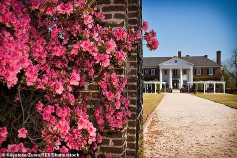 Venue:Boone Hall Plantation also famously appeared in Rachel McAdams and Ryan Gosling's r...