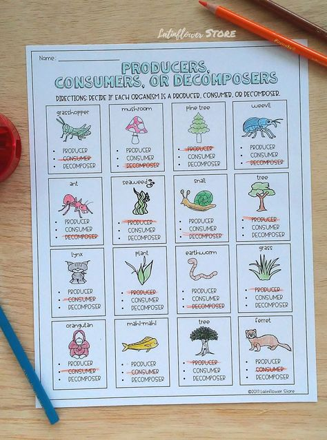 Classify each organism as a producer, consumer or decomposer.