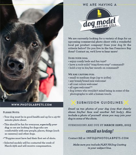 We Are Looking For Models It Cast Dog Day Afternoon Casting Call